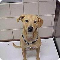 Adopt A Pet :: Bridgette - Bedford, TX