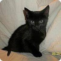 Adopt A Pet :: Nero - Norwich, NY