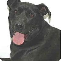 Adopt A Pet :: Bruce - Port Washington, NY