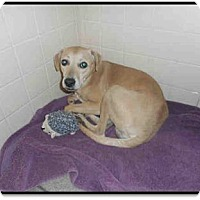 Adopt A Pet :: Barnaby - Only $55 adoption! - Litchfield Park, AZ