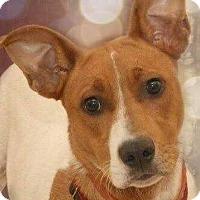 Adopt A Pet :: Ripley - Milton, GA