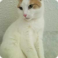 Adopt A Pet :: Star - China, MI