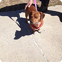 Adopt A Pet :: Vegas - Shannon, GA
