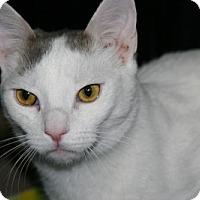 Adopt A Pet :: Speedy - Philadelphia, PA