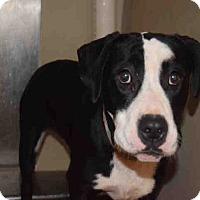 Adopt A Pet :: Lilyana - Newnan City, GA