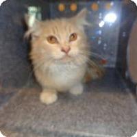 Adopt A Pet :: 338832 - Wildomar, CA