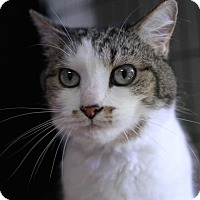 Adopt A Pet :: Michael - Winston-Salem, NC