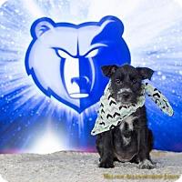 Adopt A Pet :: Grizz - Little Rock, AR