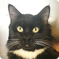 Adopt A Pet :: Noah - Port Angeles, WA