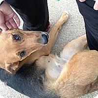 Adopt A Pet :: Molly - Vidalia, GA