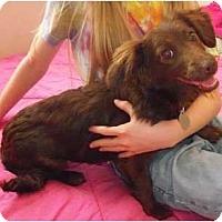 Adopt A Pet :: Chloe - Windham, NH