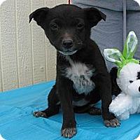 Adopt A Pet :: Pesto - Humboldt, TN