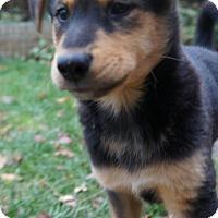 Adopt A Pet :: Bishop - Saskatoon, SK