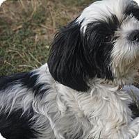 Adopt A Pet :: Daisy - Salem, OR