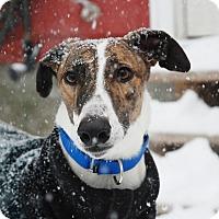 Adopt A Pet :: Houlihan - Ware, MA