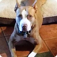 Adopt A Pet :: KAI-Emotional Support Animal - DeLand, FL