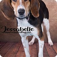 Beagle Mix Dog for adoption in Newport, Kentucky - Jessabelle