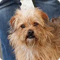 Adopt A Pet :: Mojo - Palmdale, CA