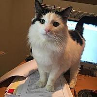 Adopt A Pet :: Spots - Philadelphia, PA
