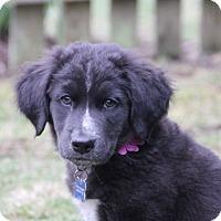 Adopt A Pet :: Villanova - Mt. Prospect, IL