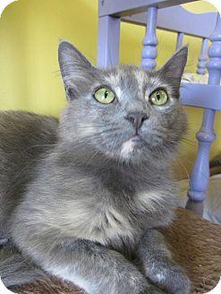 Domestic Longhair Kitten for adoption in Mobile, Alabama - Josephine