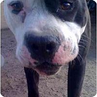 Adopt A Pet :: Harley - Fowler, CA