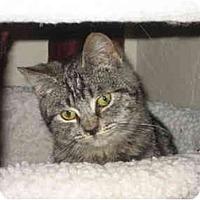 Adopt A Pet :: Mario - Davis, CA