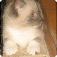 Adopt A Pet :: Dallia - Acme, PA