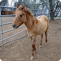 Adopt A Pet :: Cash - El Dorado Hills, CA