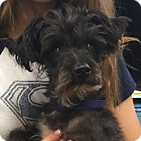 Adopt A Pet :: Aggie - Orlando, FL