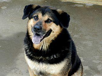 Rottweiler/Bluetick Coonhound Mix Dog for adoption in Ozark, Alabama - Ginger