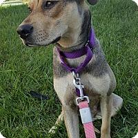 Adopt A Pet :: Joetta adoption pending - Fredericksburg, VA