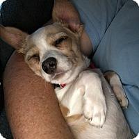 Adopt A Pet :: Tia - San Diego, CA