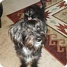 Adopt A Pet :: Zoey