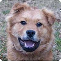 Adopt A Pet :: Sandman - Mocksville, NC