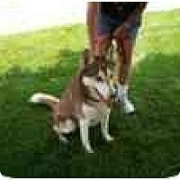 Adopt A Pet :: Eddie - Belleville, MI