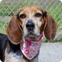 Adopt A Pet :: Maddy - Indianapolis, IN