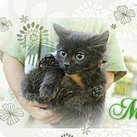 Adopt A Pet :: Meg - Washington, DC