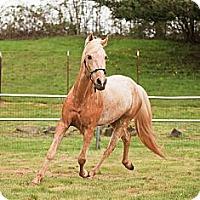 Adopt A Pet :: Elvis - Gresham, OR
