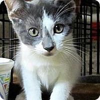 Adopt A Pet :: Addie - Seminole, FL