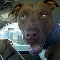 Adopt A Pet :: Sweet Pea - Lakeland, FL