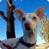 Adopt A Pet :: Tuna - Mission Viejo, CA