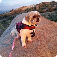Adopt A Pet :: Anastasia - Santa Ana, CA