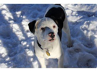 Border Collie Mix Dog for adoption in Tempe, Arizona - Forrest