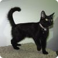 Adopt A Pet :: Wednesday - Powell, OH