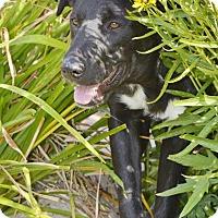 Adopt A Pet :: Marley - Meridian, ID