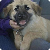 Adopt A Pet :: Rio - Las Cruces, NM