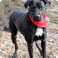 Adopt A Pet :: Buster - Dalton, GA