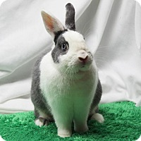 Adopt A Pet :: Cloud - Hawthorne, CA