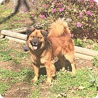 Adopt A Pet :: WENDY - Memphis, TN